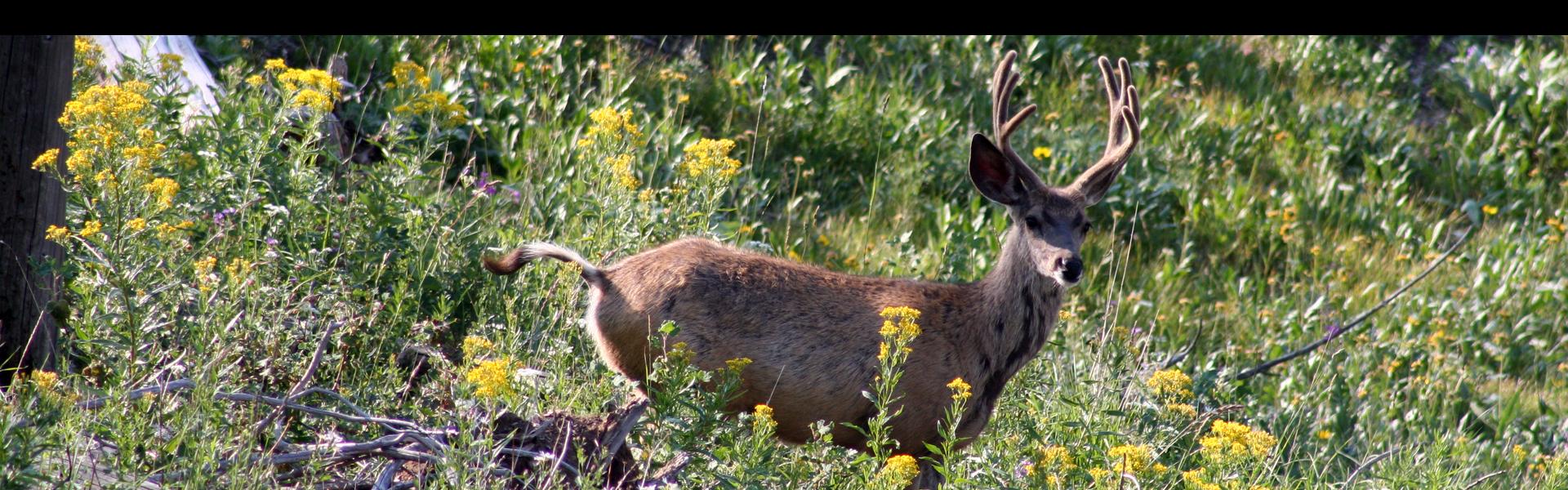 S8-Banner-Deer